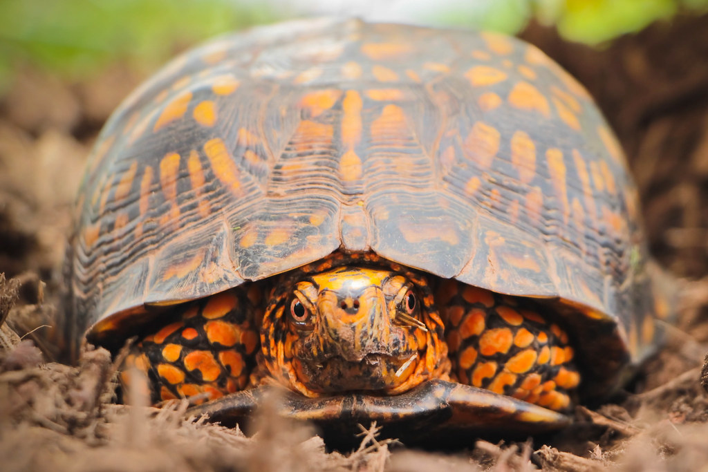 Articles: Overview To Picking Your Initial Land-Based Turtle